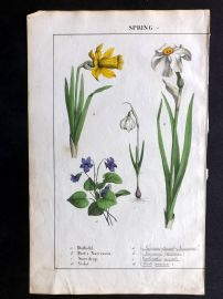 Yonge 1857 Hand Coloured Botanical Print. Daffodil, Poet's Narcissus, Snowdrop, Violet